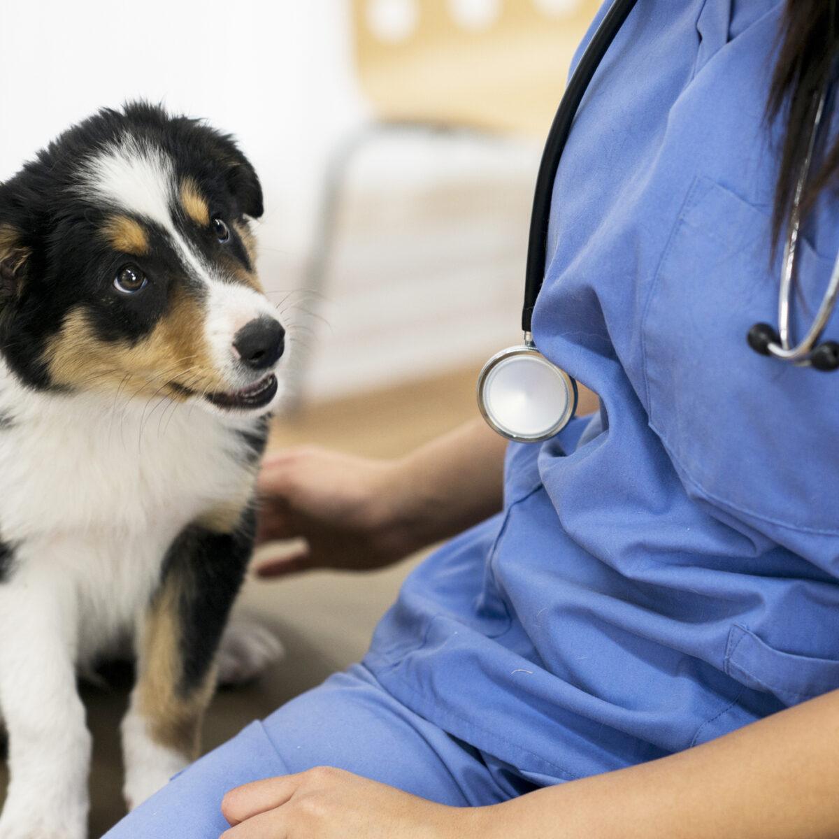 Jak leczyć choroby stawów u zwierząt?