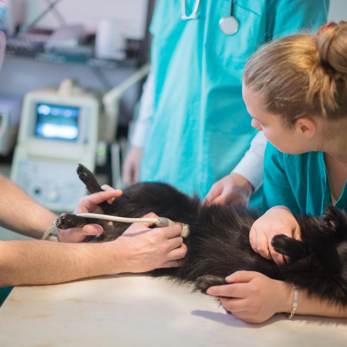Dlaczego warto robić profilaktycznie USG zwierzakom?
